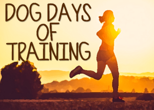 Dog Days of Training